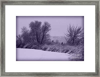 Snowy Bench In Purple Framed Print by Carol Groenen