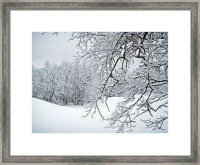 Snowy Branches Framed Print by Aimee L Maher Photography and Art Visit ALMGallerydotcom