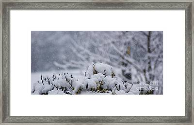 Snowy Framed Print by Carol Lynch