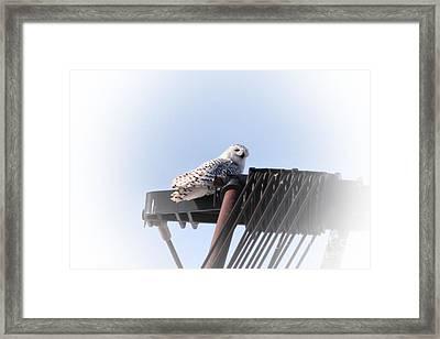 Snowy Crane Framed Print by Joseph Marquis