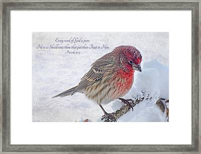 Snowy Day Housefinch With Verse  Framed Print by Debbie Portwood