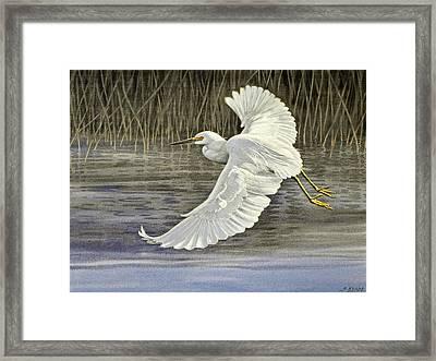 Snowy Egret Framed Print by Paul Krapf