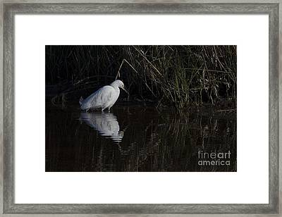 Snowy Egret Framed Print by Twenty Two North Photography