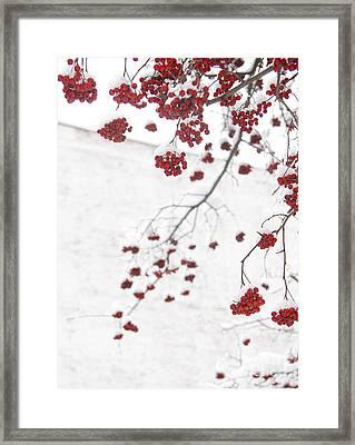 Snowy Hawthorn Berries  Framed Print by Jonathan Welch