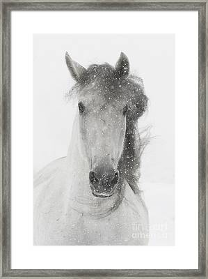 Snowy Mare Framed Print by Carol Walker