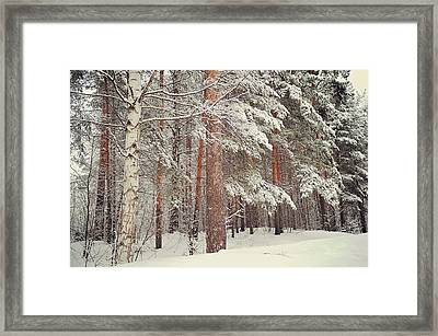 Snowy Memory Of The Woods Framed Print by Jenny Rainbow