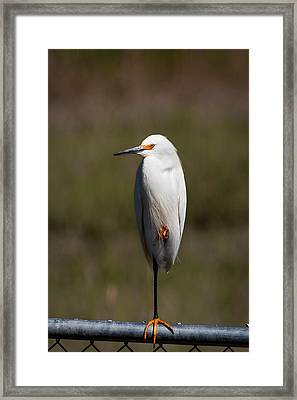 Snowy On The Fence Framed Print by Benjamin DeHaven