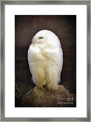 Snowy Owl Vintage  Framed Print by Jane Rix