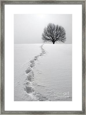 Snowy Path Framed Print by Diane Diederich