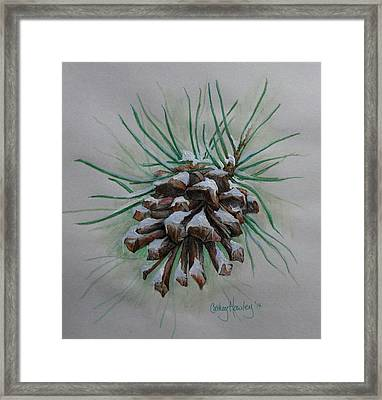 Snowy Pinecone Framed Print by Catherine Howley