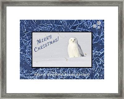 Snowy Season Framed Print by Dee Cresswell
