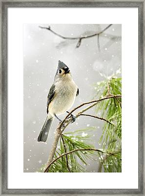 Snowy Songbird Framed Print by Christina Rollo