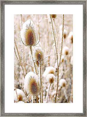 Snowy Thistle Framed Print by The Forests Edge Photography - Diane Sandoval