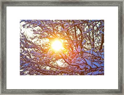 Snowy Tree Branches And Sunshine Framed Print by James BO  Insogna