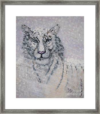 Snowy White Tiger Or Chairman Of The Board Framed Print by Phyllis Kaltenbach