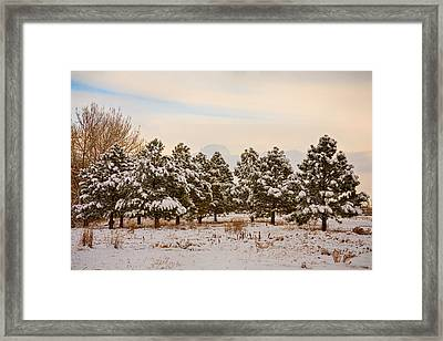 Snowy Winter Pine Trees Framed Print by James BO  Insogna