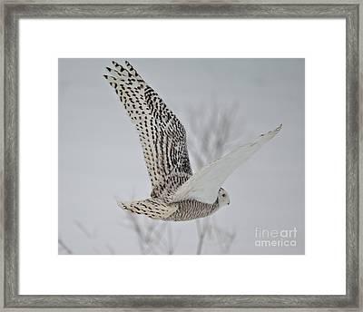 Snowy_3259 Framed Print by Joseph Marquis