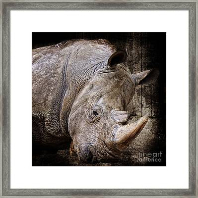 So Tired Rhino Framed Print by Angela Doelling AD DESIGN Photo and PhotoArt