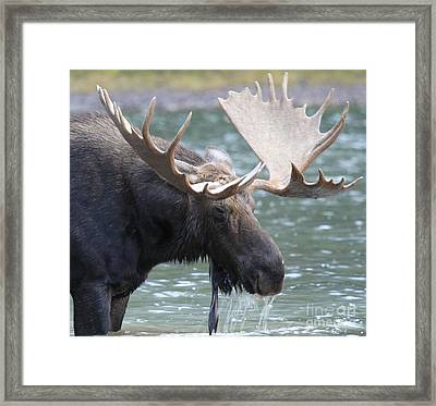 Soaked Framed Print by Adam Jewell