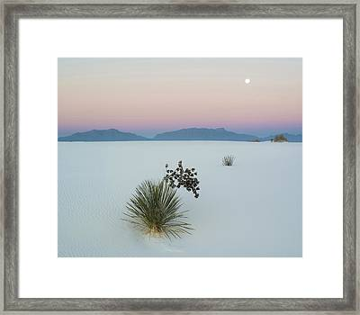 Soaptree Yucca Yucca Elata In Dawn Framed Print by Panoramic Images