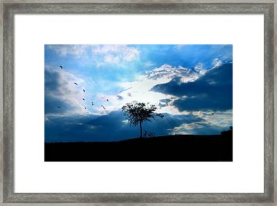 Soar Framed Print by Chrystyne Novack