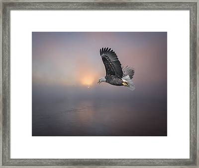 Soaring At Sunrise Framed Print by Thomas Young