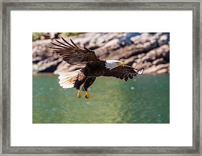 Soaring Eagle Framed Print by Ian Stotesbury
