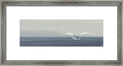 Soaring Free Framed Print by Lisa Knechtel