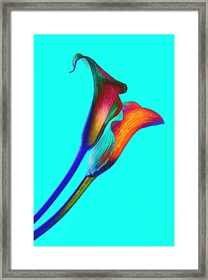 Soaring Passion Framed Print by Michael Brodie
