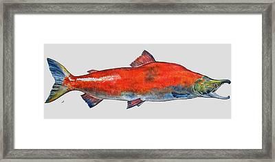 Sockeye Salmon Framed Print by Juan  Bosco