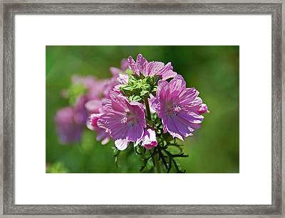 Soft And Pretty Framed Print by Aimee L Maher Photography and Art Visit ALMGallerydotcom