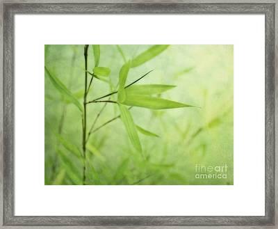 Soft Bamboo Framed Print by Priska Wettstein