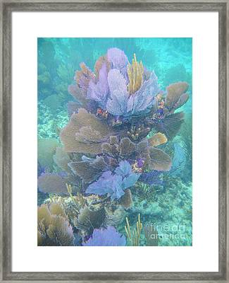 Soft Coral Framed Print by Adam Jewell