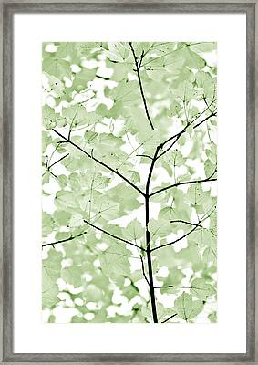 Soft Forest Green Leaves Melody Framed Print by Jennie Marie Schell