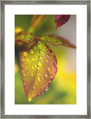 Soft Morning Rain Framed Print by Stephen Anderson