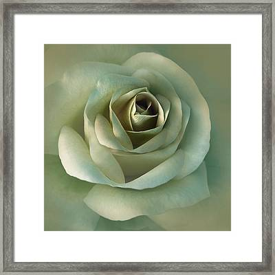Soft Olive Green Rose Flower Framed Print by Jennie Marie Schell