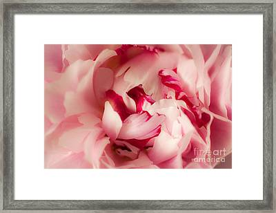 Soft Peony Framed Print by Ana V  Ramirez
