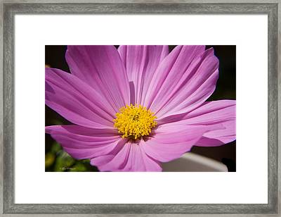 Soft Petals Framed Print by Tyra  OBryant
