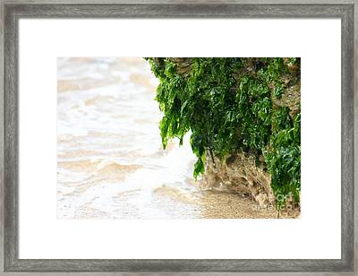 Soft Waves Of Green Framed Print by Jennifer Apffel