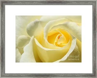 Soft Yellow Rose Framed Print by Sabrina L Ryan