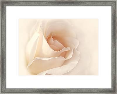 Softness Of A Peach Rose Flower Framed Print by Jennie Marie Schell