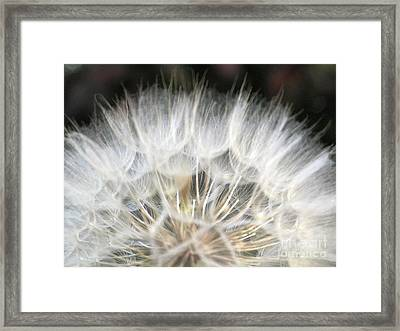 Softness Of The World Framed Print by Ausra Huntington nee Paulauskaite
