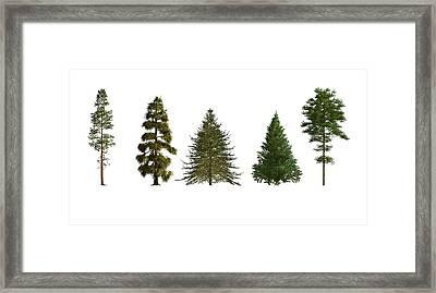 Softwood Trees Framed Print by Mikkel Juul Jensen