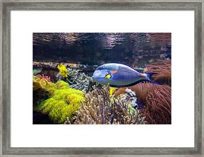 Sohal Tang  Framed Print by Mark Papke
