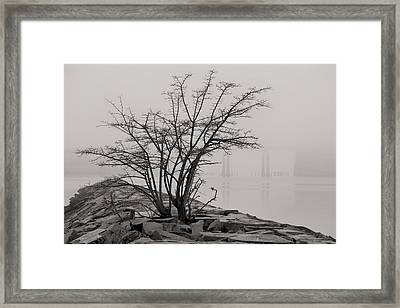 Solitary  Framed Print by JC Findley