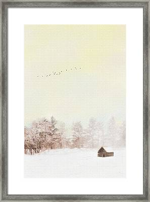 Solitary Framed Print by Mary Timman