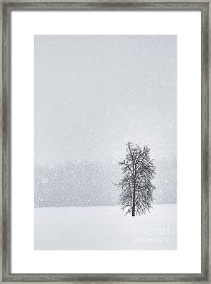 Solitude II Framed Print by Michele Steffey