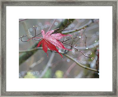 Solitude Framed Print by Arielle Cunnea
