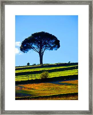 Solitude Framed Print by Michael Durst