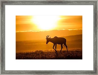 Solo Topi Sunrise Framed Print by Mike Gaudaur